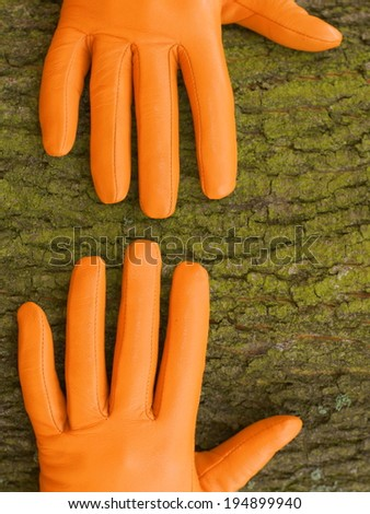 hands, Orange glove, green tree, autumn - stock photo