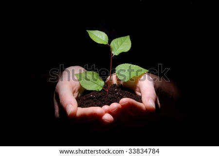 hands plant and soil showing concept of growth