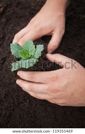 Hands planting a flower into soil