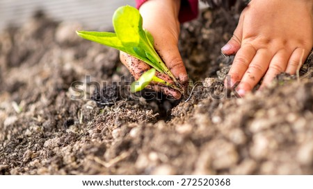 Hands planting a young green shoot in the ground, symbolic of the spring season, plant growth and renewal of nature, close up view.