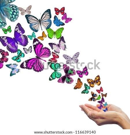 Hands releasing butterflies - stock photo