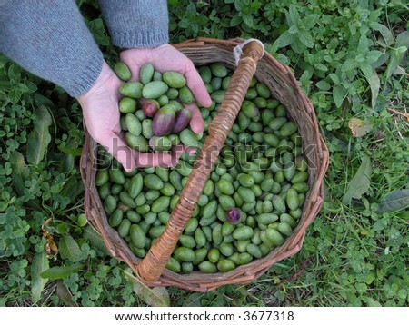 hands showing green olives - stock photo