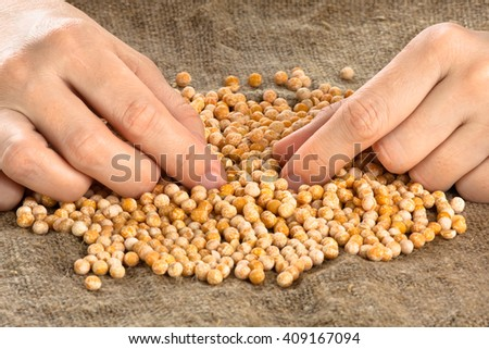 hands sorting out dried peas, closeup