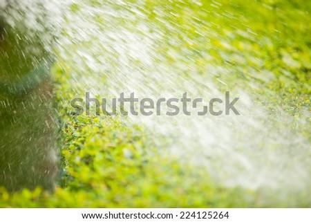 Hands watering  in garden - stock photo