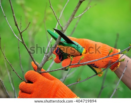 Hands with gloves of gardener doing maintenance work, pruning the tree - stock photo