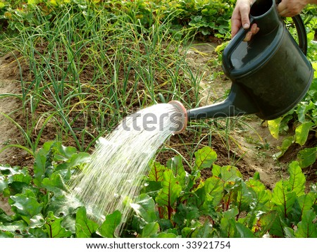 hands with watering can in action - stock photo