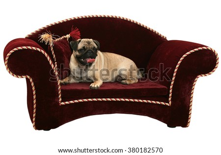 handsome a pug lies on a sofa with a pillow - stock photo