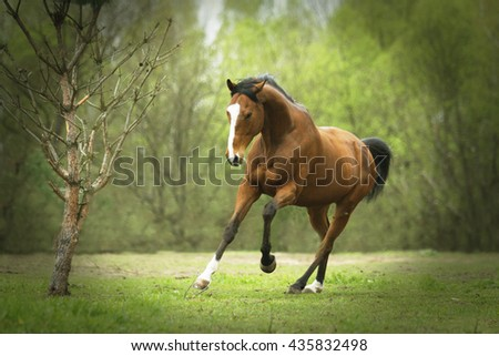 handsome and burly strong horse runs and rejoices in motion on a spring meadow at sunset