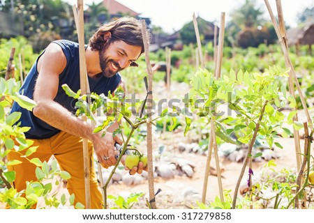 handsome gardener taking care of vegetable plants - stock photo