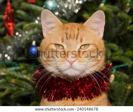 Handsome ginger tabby cat with a strand of red tinsel, with a Christmas tree background - stock photo