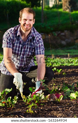 Handsome happy farmer smiling and digging into the vegetable patch garden farm harvesting his produce with a hand spade  - stock photo