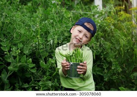 Handsome little boy holding green Peas in garden - stock photo