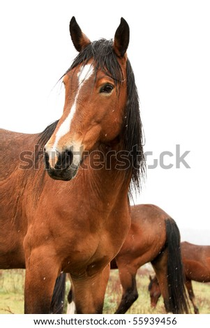 Handsome wild horse in the American West - stock photo
