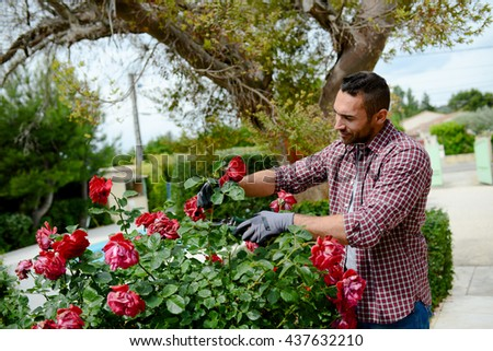 handsome young man gardener landscaping and taking care of beautiful roses - stock photo