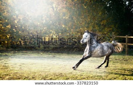Handsome young stallion horse runs gallop on beautiful pasture background  - stock photo