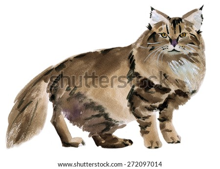 Handwork watercolor illustration of cat  in white background.
