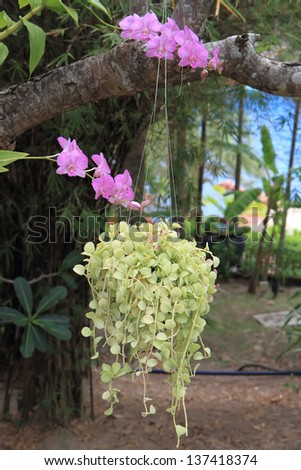 hang flower garden - stock photo