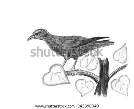 Hangbird. Bird on a branch. Pencil sketch. - stock photo