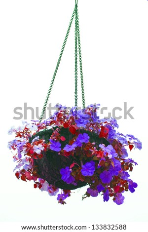 Hanging basket of flowers isolated on white background