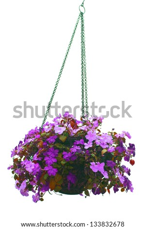 Hanging basket of flowers isolated on white background - stock photo