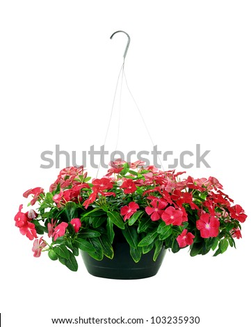 Hanging Basket with Impatiens flowers isolated over a white background with clipping path included. - stock photo