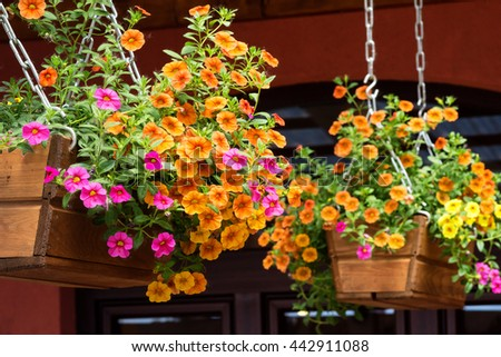 Hanging baskets of orange and pink petunia flowers.