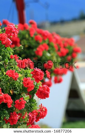 Hanging Flower Pots - stock photo