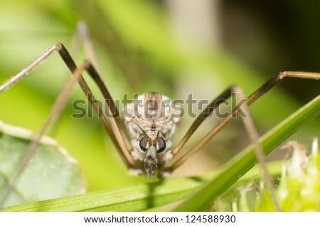 Hanging fly's head close-up - stock photo