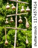 Hanging gourd birdhouses hanging from wooden poles - stock photo