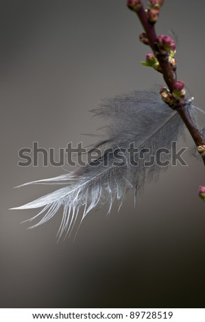 Hanging on - stock photo