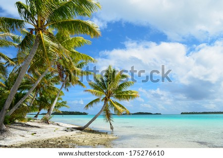 Hanging palm tree on a tropical white sand beach with a blue sea in the lagoon of the Tahiti archipelago French Polynesia. - stock photo