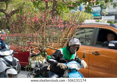 Hanoi, Vietnam - Feb 7, 2016: A man carrying peach flower tree home by motorbike. Vietnamese people usually buy peach flower tree for lunar new year holiday, symbol of spring.