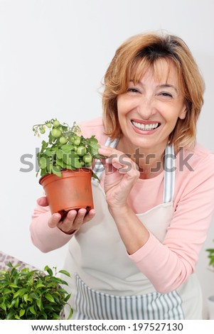 Happiness mature woman florist holding a Cherry Tomato in the flower pot. - stock photo