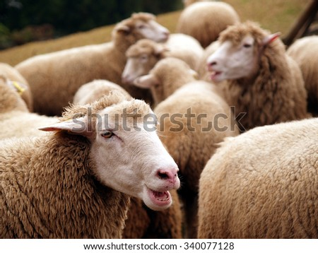 Happiness on green grassland sheep enjoy the food group - stock photo