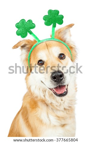 Happy and smiling cute Golden Retriever mixed breed dog wearing green clover St. Patrick's Day headband - stock photo