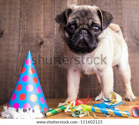 Happy Birthday Pug Puppy is available for licensing.