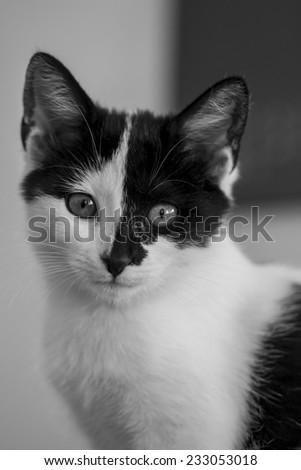 Happy black and white kitty  - stock photo