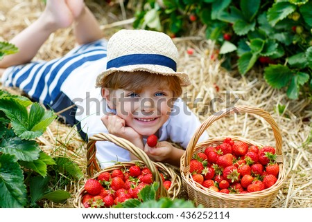 Happy blond little kid boy picking and eating strawberries on organic bio berry farm in summer, child on warm sunny day. Harvest fields in Europe. - stock photo
