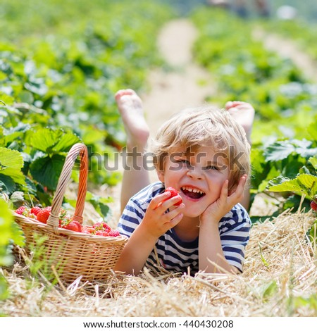 Happy blond little kid boy picking and eating strawberries on organic bio berry farm in summer, on warm sunny day. Harvest fields in Europe. - stock photo