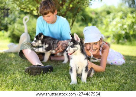 Happy boy and girl playing with two puppies husky on the grass - stock photo