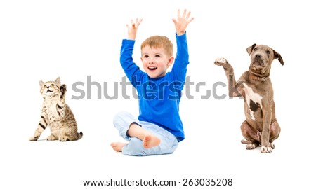Happy boy, kitten Scottish Straight and pit bull puppy sitting with hands raised isolated on white background