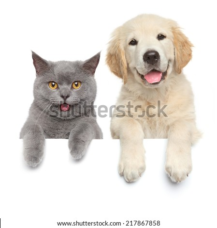 Happy cat and dog show paws above white banner. isolated - stock photo