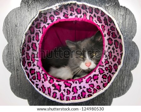Happy / content fluffy Norwegian cat resting / lounging in a cat house / hotel - stock photo