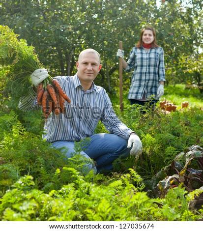 Happy couple  harvesting carrots in field - stock photo