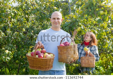 Happy  couple picks apples in the orchard