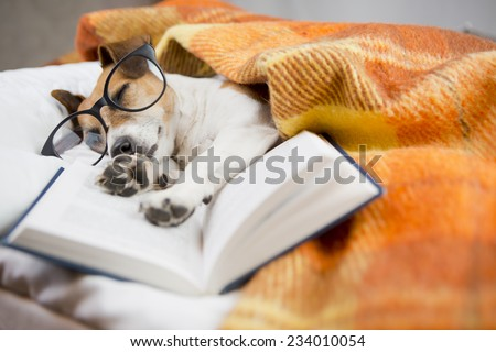Happy cute dog with reading glasses fell asleep in a comfortable bed with a book - stock photo