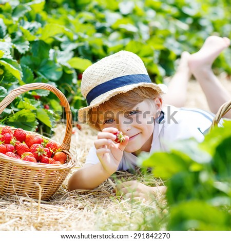 Happy cute kid boy picking and eating strawberries on organic bio berry farm in summer, on warm sunny day. Harvest fields in Germany. Healthy food for children. - stock photo