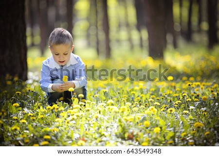 Happy cute little kid on green grass lawn with blooming yellow dandelion flowers on sunny spring or summer day. Child playing among pine trees. Little boy dreaming and relaxing collecting a bouquet