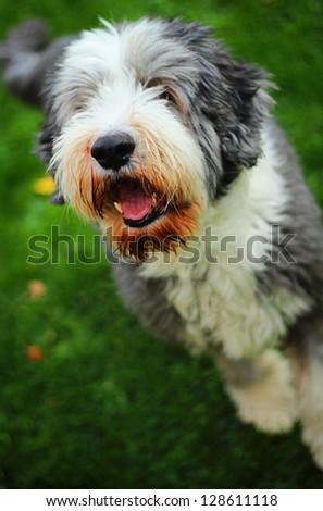 Happy dog - stock photo