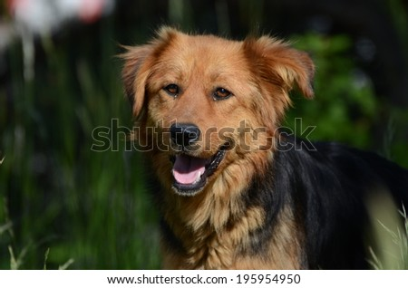 Happy dog - stock photo
